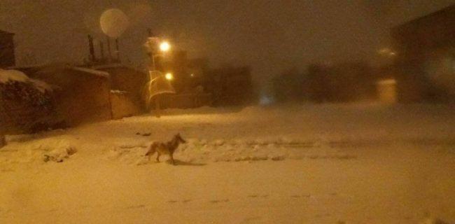 ♦️حضور گرگها در شهر سقز کردستان/ سقزی ها مراقب باشند